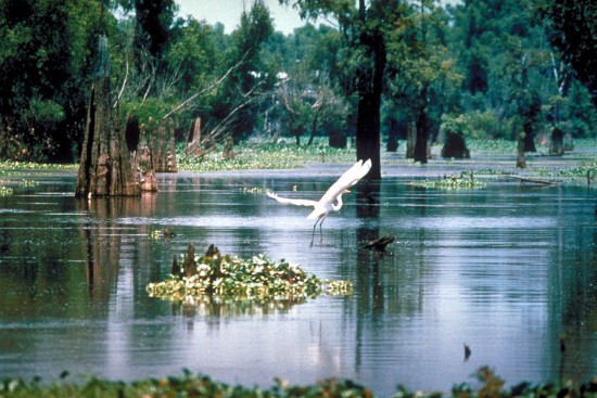 The opening of the Morganza Spillway threatens an Atchafalaya Basin teeming with life -- and music.